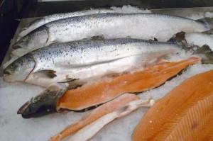 salmon-619x412